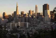 San Francisco Skyline 5-18 (Steve Stowell) Tags: sanfrancisco skyline downtown financialdistrict transamericapyramid bankofamericabuilding salesforcetower goldenhour architecture buildings cities