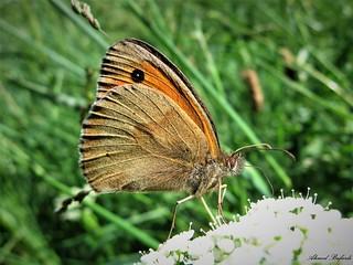Butterfly 1610