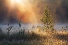 5:46 at the lake MMXVI (WilliamBee) Tags: dawn morning sunrise flare rays mist fog haze lake nature landscape dew nobody beautiful dämmerung morgen sonnenaufgang aufflackern strahlen nebel dunst see natur landschaft tau schön mañana amanecer bengala rayos niebla neblina lago naturaleza paisaje rocío hermoso greatphotographers