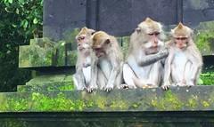 Is it Ethical to clone us ... ? (dodagp) Tags: indonesia bali ubud padangtegal sanctuaries thesacredmonkeyforest longtailedmonkeys macaques monkeyfamily scienceethics ethicalnorms implicationsofcognitivescienceforethics anthropomorphiccreatures clonedmacaques creatureswithanthropomorphicattributes