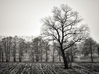 Baum auf dem Feld