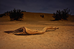 The moonlit dune (debamalya.chatterjee) Tags: landscape landscapephotography nikon nature night nightscape desert d7200 deathvalleynationalpark deathvalley mesquite dunes