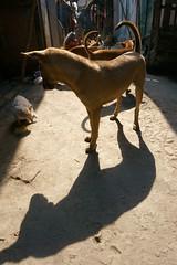 'Close supervision' (Rajib Singha) Tags: travel street animal cat dog shadow dailylife city lane food survival people interestingness flickriver sonyilce6000 kumartuli kolkata india