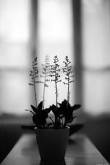 Verso (Mathieu HENON) Tags: leica m240 noctilux 50mm noirblanc nb monochrome blackwhite france cachan maison hiver