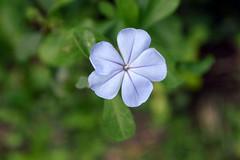 WOL Calauan Laguna Philippines Day 1 (120) (Beadmanhere) Tags: philippines flowers