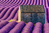Boat in a lavender sea (ozrot) Tags: lavender house valensole row cultivated provance