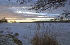 2018 Tammikuu (tommi.hietaniemi) Tags: sunset canon canon1dmarkiii 1740 mm l tommihietaniemi tuusula tuusulanjärvifinland tuusulalake winter cold tree hiezu79