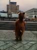 A bear in Kiev (rvjak) Tags: ours kiev ukraine bear iphone street rue fun funny