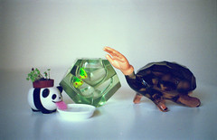 Obscure objects *3* (Stephanie Overton) Tags: film 35mm kodak olympus om10 wierd objects hand green glass series table obscure tiny brown still life panda grow plant toy fish