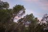 A morning in Zaghount Mount. (sofienrhouma) Tags: nature tagsforlikes sky sun beautiful pretty sunset sunrise ontheroad day tree twilight clouds beauty light photooftheday love green skylovers dusk weather iphonesia mothernature zaghouan