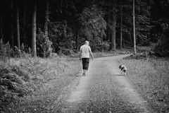 Friendship (Missy Jussy) Tags: mansbestfriend friendship trevorkerr man male dog dogwalk pet englishspringer animal springerspaniel spaniel france southwestfrance lane labrugere holiday trees fern road countryside mono monochrome blackwhite bw blackandwhite