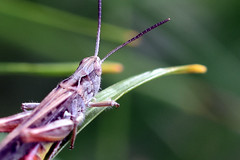 459 (Realmantis) Tags: animal bug closeup insect invertebrate macro nature