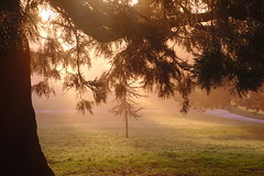 Misty Morning Rays (Dave Roberts3) Tags: wales gwent newport park bellevue weather mist path light shade shadows naturethroughthelens
