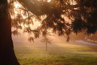 Misty Morning Rays
