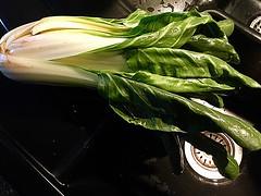 #Mangold (RenateEurope) Tags: mangold food vegetable green organic tasty iphoneography 2018 renateeurope chard swisscard