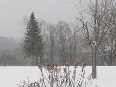 February snow (2) (Ange 29) Tags: snow trees olympus omd em1 mkii 35100mm zd king township canada