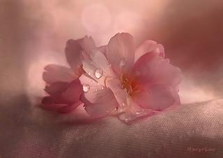 Pink Shades ...