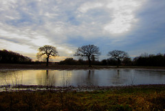 three trees (SociétéRoyale) Tags: halewood liverpool edge flooded village knowsley flood field agriculture ice frozen england landscape english old woods eerie nature merseyside