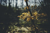 Sculpture Park (Sjaco Manuputty) Tags: nature branch tree leaf leaves garden sculpturegarden woods forest kröllermüllermuseum netherlands otterlo hogeveluwe samyangaf35mmf14 samyang