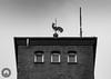 Roter Hahn (Fotofabrik Itzehoe) Tags: itzehoe schleswigholstein holstein kreissteinburg stör blackandwhite schwarzweis feuerwehr schlauchturm ochsenmarkskamp