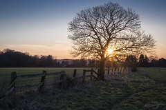 Sunset in Mülheim | Ruhr | Germany (*Photofreaks*) Tags: sunset sonnenuntergang mülheim ruhr ruhrgebiet deutschland germany nrw nordrheinwestfalen northrhinewestphalia tree baum fields felder winter adengs wwwphotofreakseu aoi elitegalleryaoi bestcapturesaoi