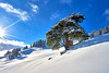 The Beauty in the Snow (W_von_S) Tags: thebeautyandthesnow tree baum schnee snow snowlandscape snowscape snowshoehike schneelandschaft schneeschuhwanderung winter winterlandschaft winterpanorama februar february 2018 landschaft landscape panorama paysage paesaggio natur nature sun sonne sunburst sonnenstern alpen alps berge mountains bavaria bayern germany deutschland sony sonyilce7rm2 wvons werner weis blau whiteblue outdoor sudelfeld