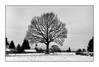 Le Morvan (Punkrocker*) Tags: leica m2 konica hexanon m 50mm 502 film kodak trix 400 nb bwfp morvan saulieu bourgogne france tree snow landscape