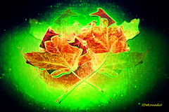 Two Leaves (Stephenie DeKouadio) Tags: canon art artistic abstract abstractart macroabstract hypnotique leaves