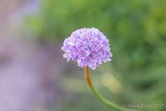 20170526_021 (Thorndike.ar) Tags: cologne deutschland europa europe flora germany köln nordrheinwestfalen northrhinewestphalia