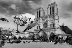 Cathedrale Notre-Dame de Paris (Ramses 2) Tags: 2017 france frankreich paris cathedrale notredame de bw blackandwhite pigeons church eglise nikon d700 travel tourism traveöphotography landmark famous sky clouds birds religion catholic