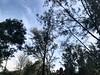 (chi.ilpleut) Tags: iphonegraphy 2018 malaysia lunarnewyear february coast borneo yearofdog dailylife instantmemory everymomentcounts moments sweethome umi 海 amstrand ammeer