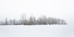 Winter monotony (++sepp++) Tags: landscape landschaft landschaftsfotografie schnee winter snow bäume trees graben bayern deutschland de bavaria germany weis white februar february