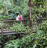 Rainforest walkway (idunbarreid) Tags: bridge rainforest walkway