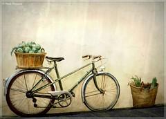 Trompe-l'oeil du vélo après le marché (bleumarie) Tags: hiver20172018 janvier2018 littoralméditerranéen mariebousquet photomariebousquet saintemarielamer stationbalnéaire suddelafrance catalogne france hiver horssaison littoral méditerranée mer plage pyrénéesorientales roussillon saintemarie sud village