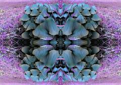 20130111_135247 K (C&C52) Tags: extérieur closeup champignons smartphone surimpressions artnumérique kaleïdoscope