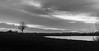 Silhouettes (DC P) Tags: silhouettes landscape tree water reflection church bird birds cloud clouds morning sunrise silhouette black blackandwhite bw mono monochrome waterfront holland netherlands grey serene a7rii beautiful blackwhite depth explore field light nature ngc noir nightfall nightshot outdoor outside pov panorama sky urban view wideangle wide world winter mystic