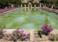 Cordoba (Hans van der Boom) Tags: vacation holiday spain andalucia cordoba gardens alcazar royal pond water plants flowers purple es