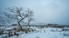 a cold start. (akh1981) Tags: nikon nisi nationalpark nature nationalheritage manfrotto mountains moody beautiful cumbria clouds countryside crummockwater landscape lakedistrict lake outdoors travel trees uk unesco sunrise sky wideangle walking water