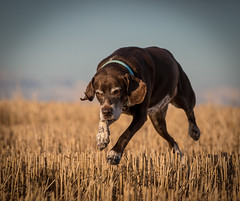 Bruno (Paul`s dog photography) Tags: