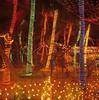 Lights on trees Maldives (jonathonbennett8631) Tags: water newyearseve hasselblad velvia seascape brightlights decoration colour maldives celebration film scanner red blue trees palm multicoloured