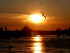Tschüss für ein paar Tage***Bye for a few days (BrigitteE1) Tags: sonnenuntergang bremen weserwehr weser river riverweser fluss deutschland norddeutschland germany northgermany urlaub holiday sunset