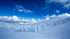 Snow rime (Masa_N) Tags: bluesky trees winter snowrime zao yamagata clouds snow japan mountain