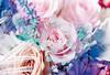 Bouquet Monet (Hayden_Williams) Tags: canonae1 film fd50mmf18 analog analogue kodakportra400 portra 400 portra400 doubleexposure multipleexposure bouquet flowers rose monet colorful dream dreamy
