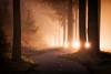 Stars (albert dros) Tags: sunburst sunrise sunset mist moody zigzag light trees road tree netherlands forest spooky speulderbos sunstar carlight atmosphere curvyroad fog curve