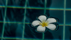 phuket 022 (Alph Thomas) Tags: lumixtz70 digitalphotography landscape photography thailand phuket seasia travels