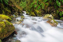 On The Way (daynawines) Tags: longexposure nature waterfall outdoor outside water plant rocks ferns moss green river forest pnw
