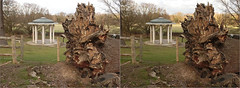 Runnymede 2018-3 -Stereo Crossview (Barrie_r) Tags: stereo 3d crossview crosseye runnymede