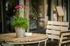 _DSD9877 (diegoberna) Tags: tavolo fiori vaso sedia sfocato floreale closeup allaperto nikon nikond7000