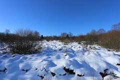 IMG_0243 (rudolf.brinkmoeller) Tags: eifel wandern natur eifelsteig hohesvenn