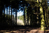 wald-7761 (Stanco) Tags: wald forest foret tree trees baum bäume bad nauheim wetterau hessen